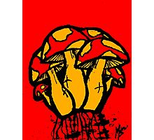 Mushrooms edit Photographic Print