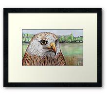 Red Kite Framed Print