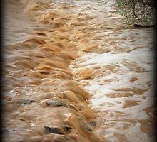 Muddy Waters by Kimberly Chadwick