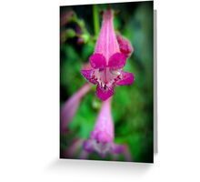 Canyon Penstemon Greeting Card