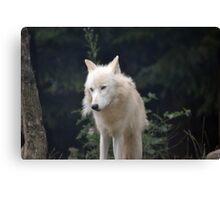 Grand Méchant Loup d'Arctique Canvas Print