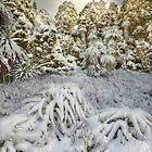 Morning light on fresh snowfall by Kevin McGennan