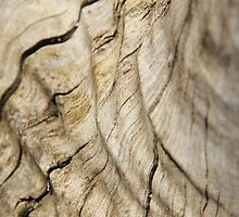 Hardwood - Backgrounds from Nature - Wood Grain by LivingWild