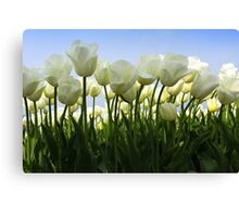 Between the Tulips Canvas Print
