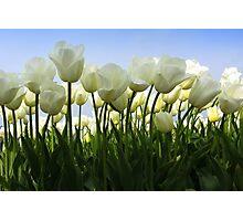 Between the Tulips Photographic Print