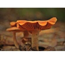 Little Orange Mushroom  Photographic Print
