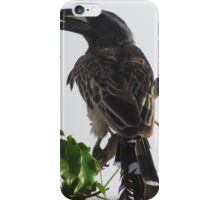 Hornbill, Somalia iPhone Case/Skin