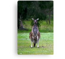 Photogenic Kangaroo with Joey in Pouch Canvas Print