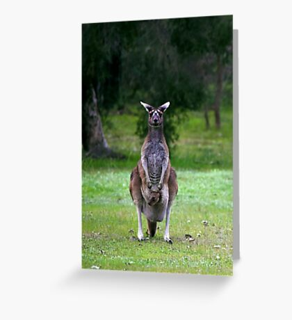 Photogenic Kangaroo with Joey in Pouch Greeting Card