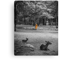Monk doing daily cleaning routine  Canvas Print