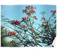 Flamboyant Tree in Zanzibar Poster