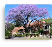 Jacaranda tree, Australia Canvas Print