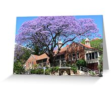 Jacaranda tree, Australia Greeting Card