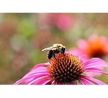 Busy Bumble Photographic Print