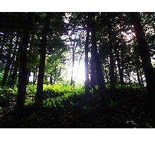 Early Morning Light in the Woods  Photographic Print
