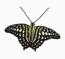 Real Butterfly No. 2 - Pale Green Spots by LastLittleBird