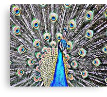 Peacock vibrant Canvas Print