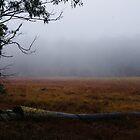 Winters' Mist by Liz Worth