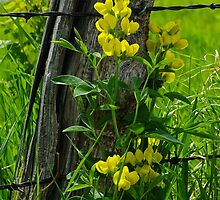 Yellow Pea by Gary Benson