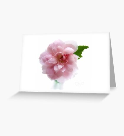 Mayflower Rose Greeting Card