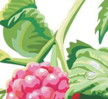 Raspberry Sticker