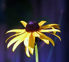 A Rousing Rudbeckia by AngieDavies