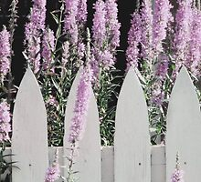 Beyond A Garden's Picket Fence  by AngieDavies