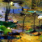 Shadow-Fall by Nadya Johnson