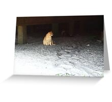 cats under the boardwalk Greeting Card