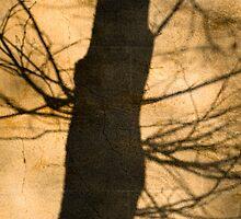 shadow by Ido Friedman (2DogsDesign)