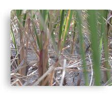Dune Grass Close Up Canvas Print