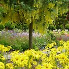 Predominantly yellow by Sue Gurney