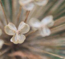 Seeds of Love - JUSTART © Sticker