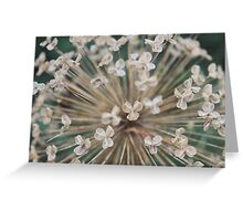 Seeds of Love - JUSTART © Greeting Card