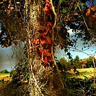 Druid Oak by RC deWinter