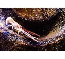 Crustaceans Photographic Print