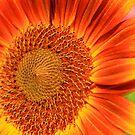 Bicolor Sunflower by Joy Fitzhorn