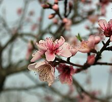 Spring Is In The Air by Vivian Sturdivant