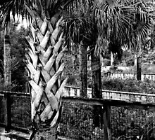 Palms And Walls In Black And White by ksimmonsluna