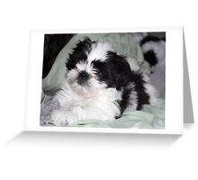 Suzi's  Baby Picture at 7weeks Greeting Card
