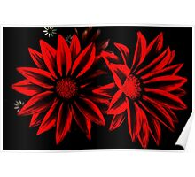Red&Black Flowers Poster