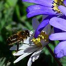 Surprise Garden Visitor by rosie320d