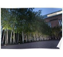 Modern Birch Garden in Front of Tate Modern Art Gallery, London Poster