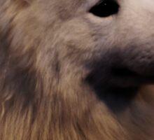 Samoyed Portrait Sticker