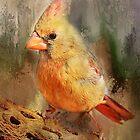 Pretty Female Cardinal by Barbara Manis