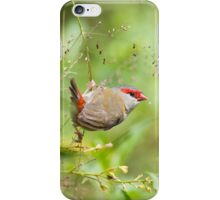 Red-Browed Finch iPhone Case/Skin