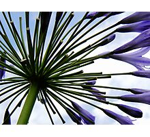 Mystery Flower Photographic Print