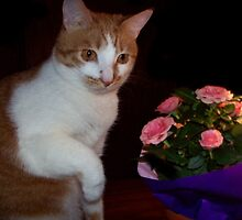 Are These For Me by Marie Sharp