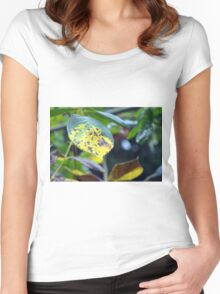 Macro on green and yellow leaves. Women's Fitted Scoop T-Shirt