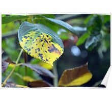 Macro on green and yellow leaves. Poster